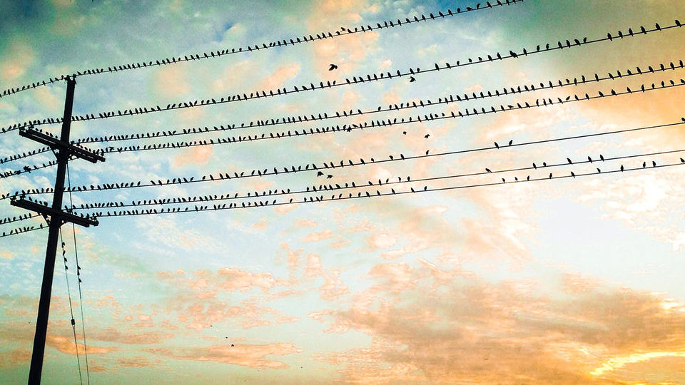 Many birds sitting on telephone pole wire at dusk