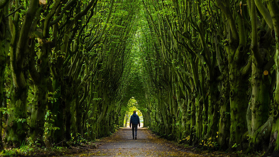 Man walking down a forest path