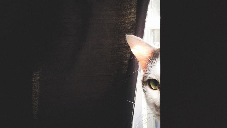 Cat peering out from behind a curtain