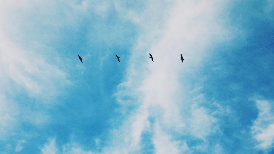 Four birds flying in a straight line.