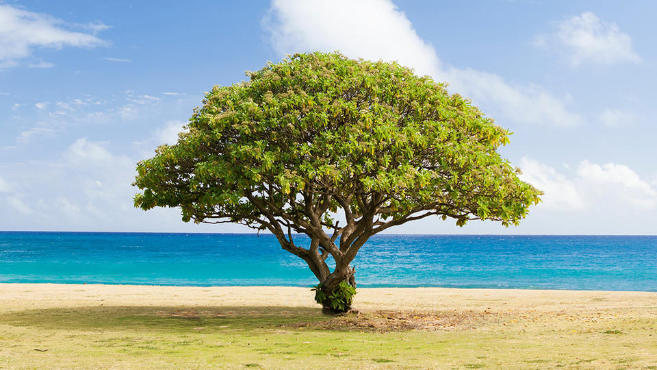 Tree near beach